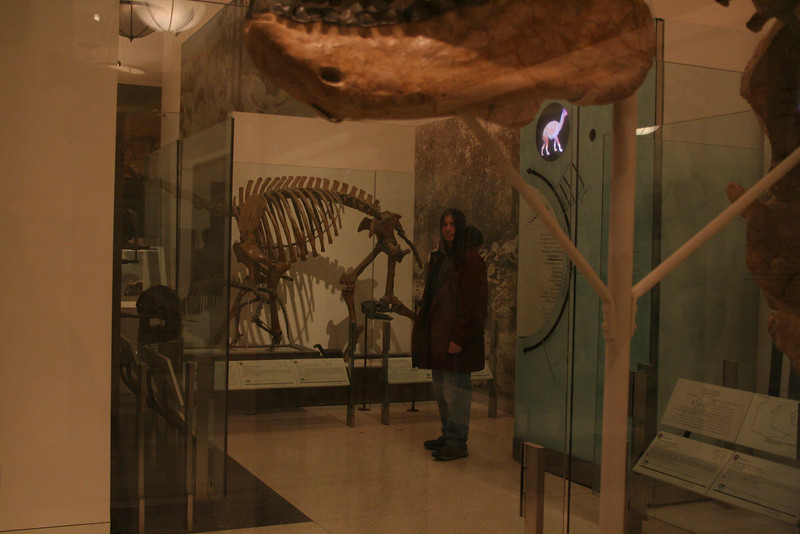In which I visit the American Museum of Natural History.