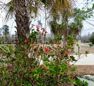 2012 Feb 24 Flowers Shore