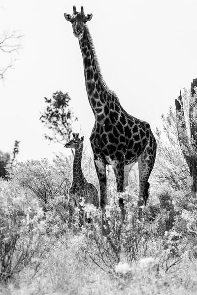 Botswana_June_2017 (1513 of 6179).jpg