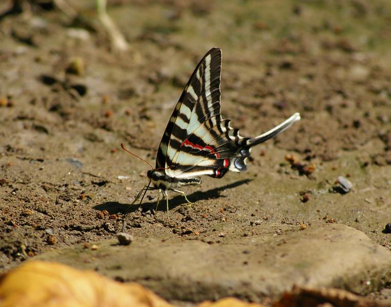 butterflyapalooza 048.jpg