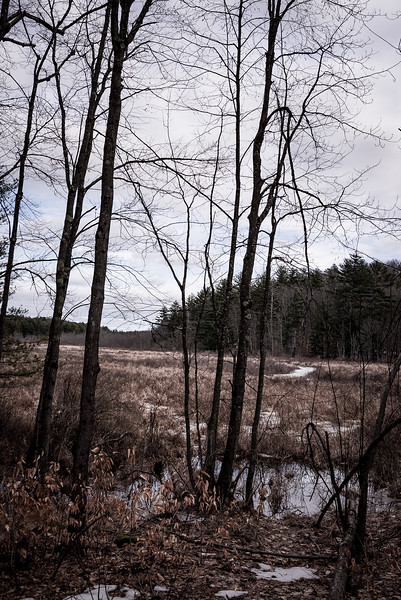millevisitnewhampshireconcord.danielathompsonphotography.concordNH-27.jpg