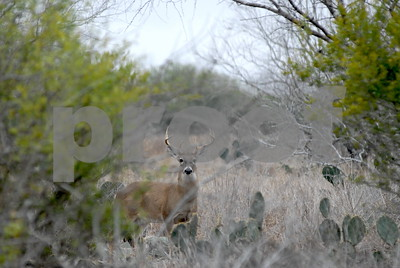 agrilife-extension-sets-whitetailed-deer-summit-aug-3-in-abilene