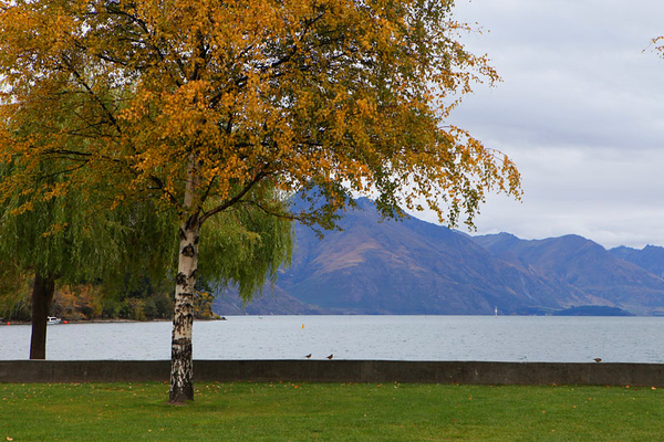 Trees with lake and mountain.jpg