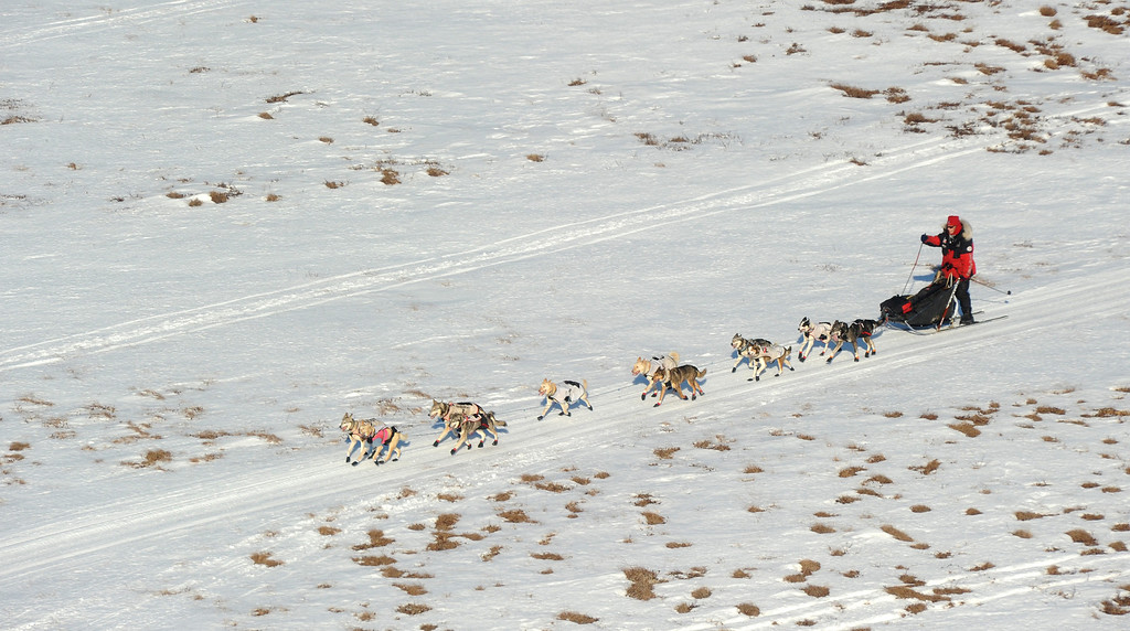 . Aliy Zirkle mushes her dog team between the checkpoints of Kaltag and Unalakleet during the 2014 Iditarod Trail Sled Dog Race on Saturday, March 8, 2014. (AP Photo/The Anchorage Daily News, Bob Hallinen)