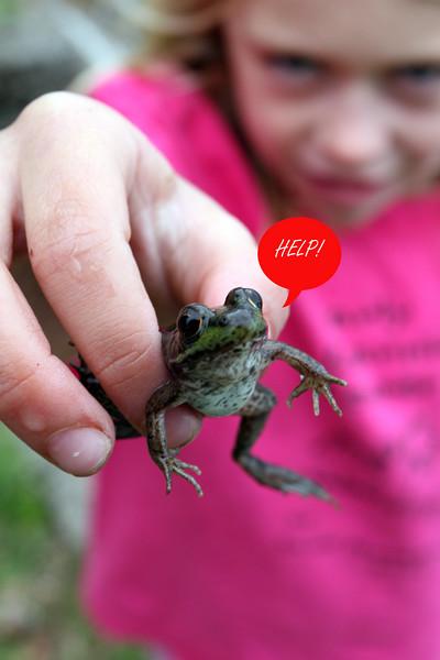 Frog - Help.jpg