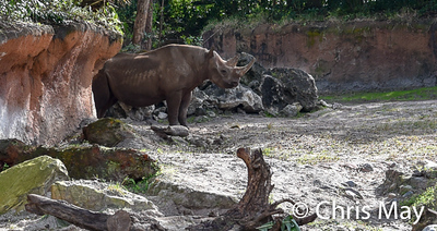 Animal Kingdom 18-13.jpg