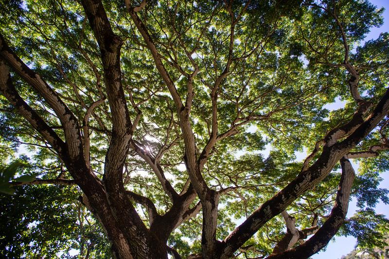 Hawaii2019-626.jpg