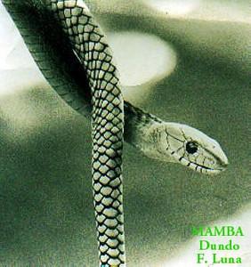 MAMBA Dundo (foto de Luna de Carvalho)