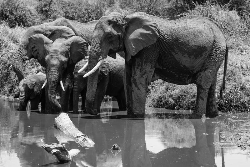 Elephant family at Water Hole