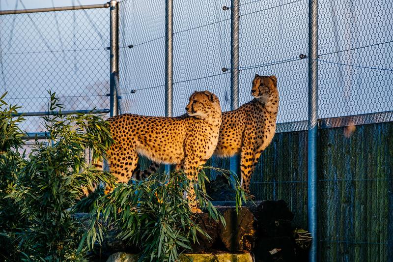Tonis Zoo-0199.jpg