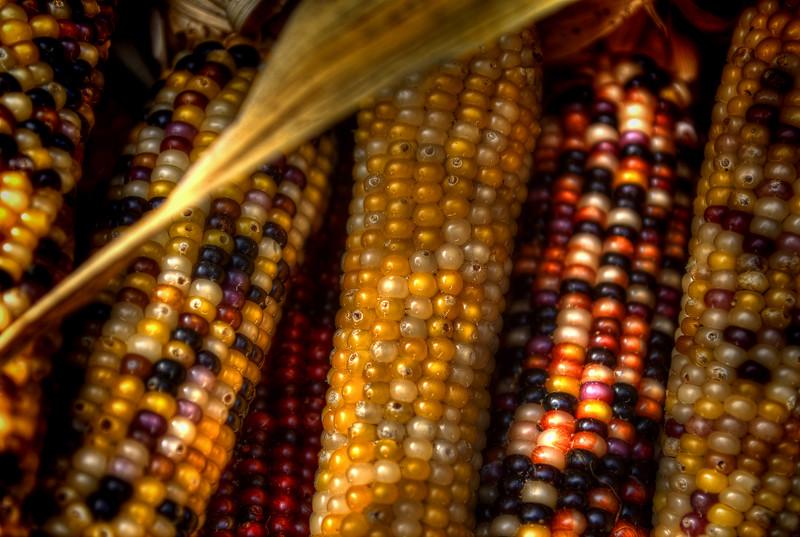 autumn 2014 - brecknock orchard indian corn(p).jpg