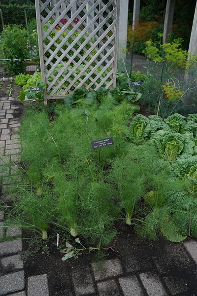 Arboretum, July Harvest-44.JPG