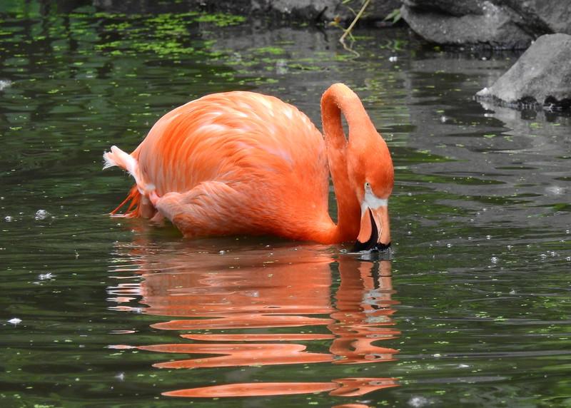 Denver Zoo 2018 (2683).JPG