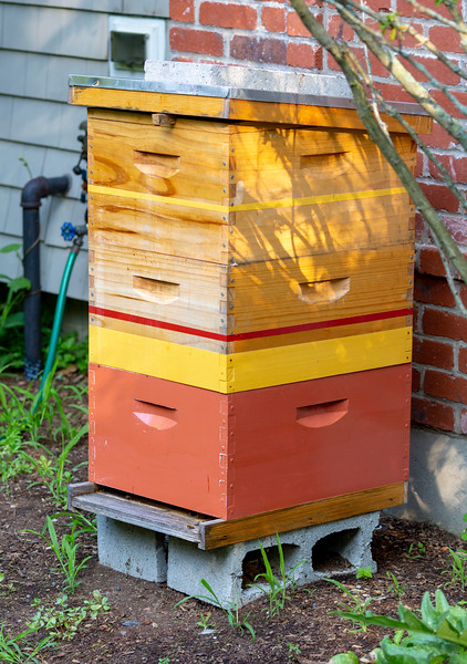 Theresa keeps a beehive outside the house.  We'll see the bees on the way back from Iceland.