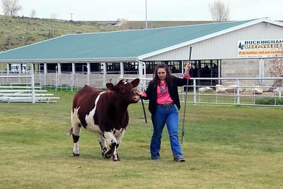 Beef Showmanship