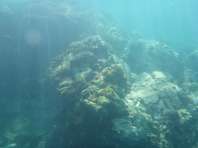 Bequia Snorkelling