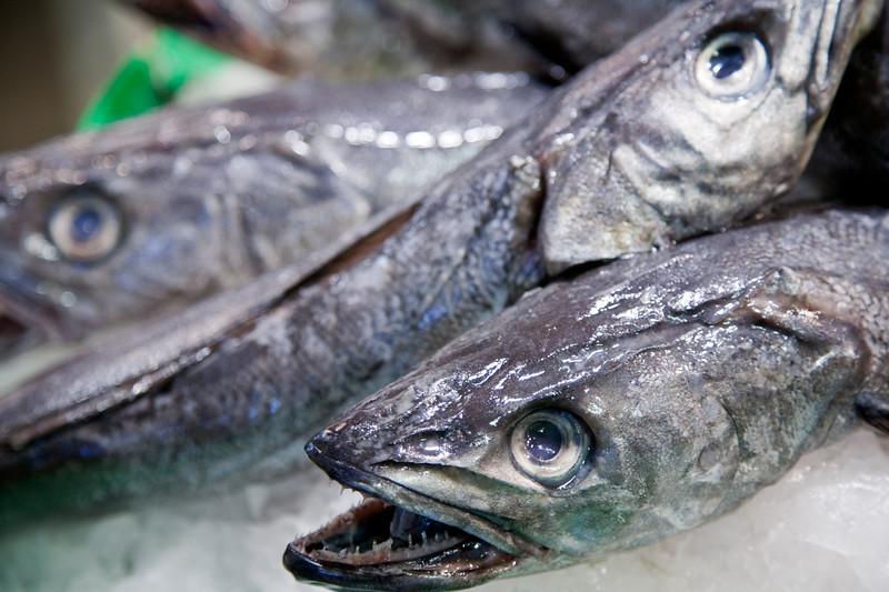 Hake fish, Boqueria market, town of Barcelona, autonomous commnunity of Catalonia, northeastern Spain
