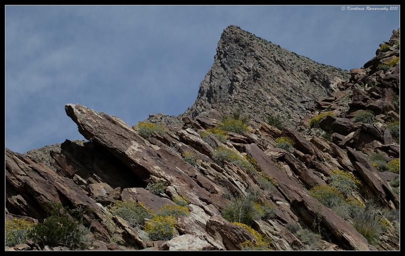 Palm Canyon Trail, Anza Borrego Desert State Park, San Diego County, California, April 2010