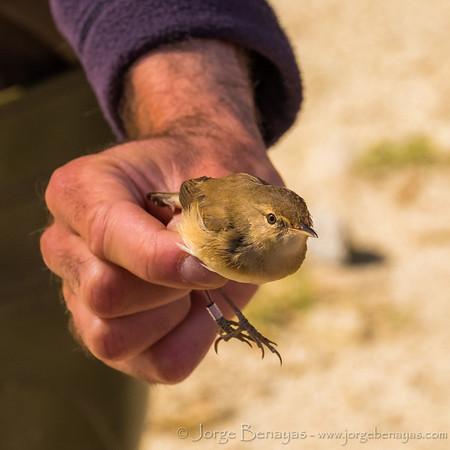 Papageno Birding