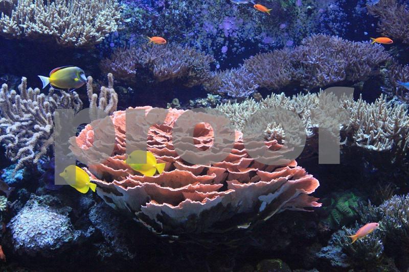 Seattle Aquarium 9152.jpg