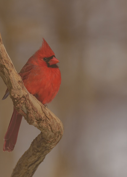 Birds of January 2019
