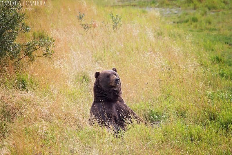 Bear-9-2.jpg