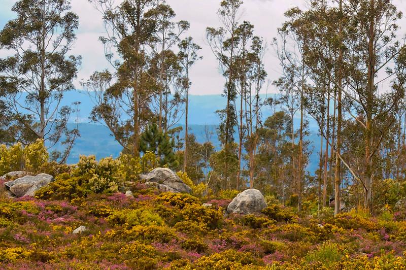 Vouzela-PR2 - Um Olhar sobre o Mundo Rural - 17-05-2008 - 7461.jpg