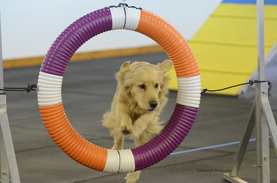 POTC AKC Agility Trials March 8-9, 2014