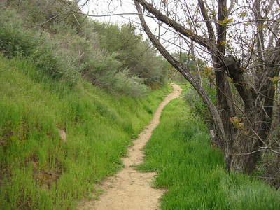 New Millennium Trail