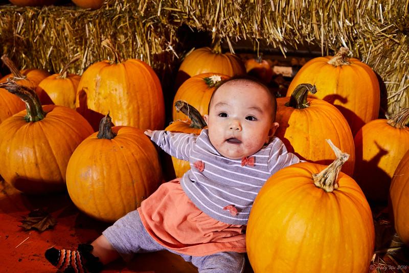 pumpkin__12.jpg