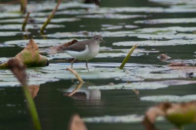 lakeside 2011