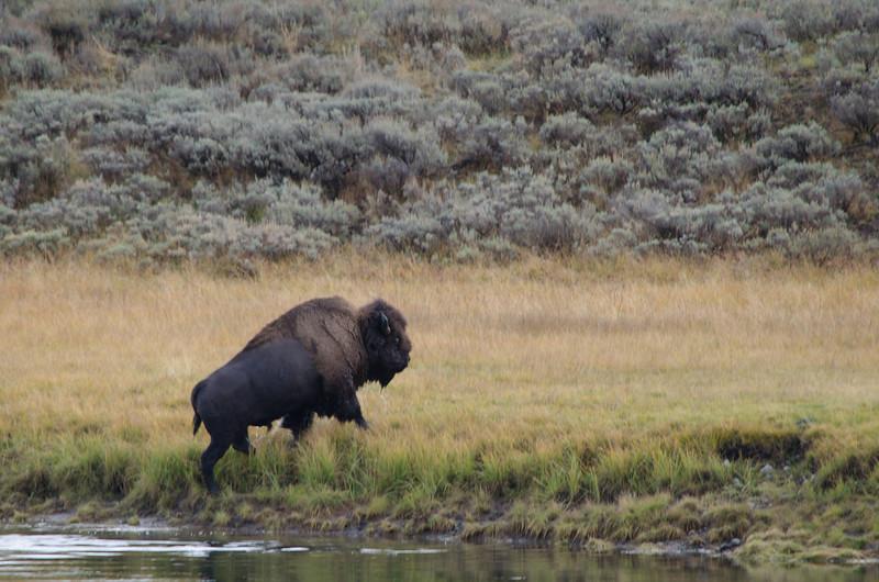 Terry's Yellowstone & Grand Tetons-1433-237.jpg