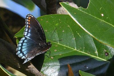 Audubon Trip to Castle Hayne Bluffs