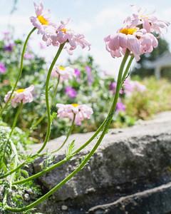 Flowers- FINE ART