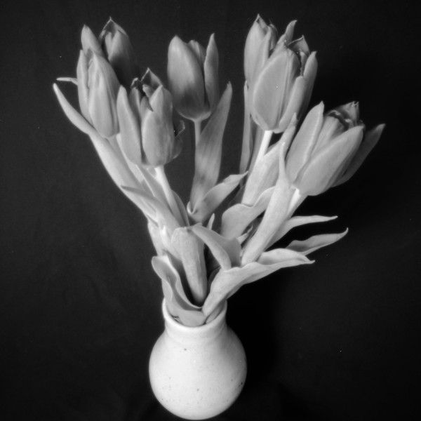 Tulips, pinhole photograph