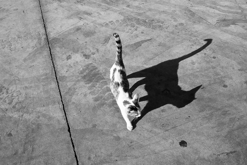 Baby cat shadow