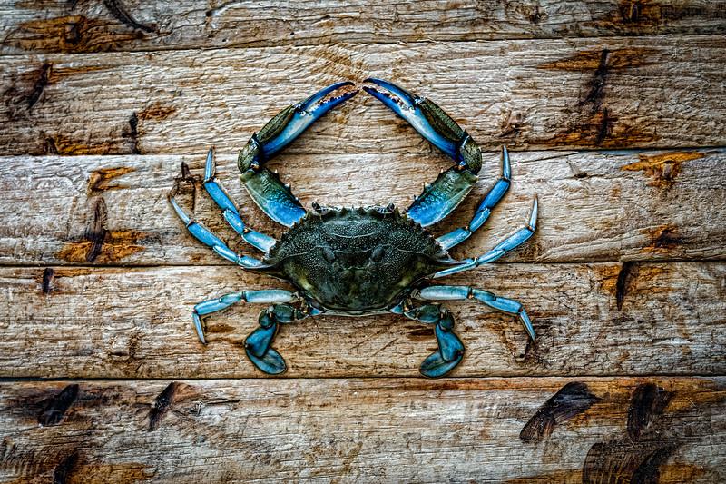 2019 Blue crab