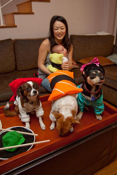 Dog-sushi-halloween-52.jpg