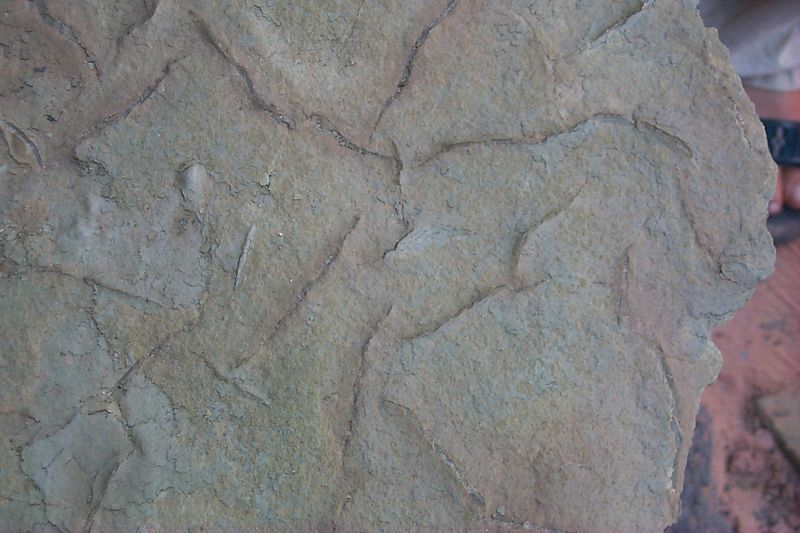 Worm Fossils   (Jun 10, 1999, 11:12am)