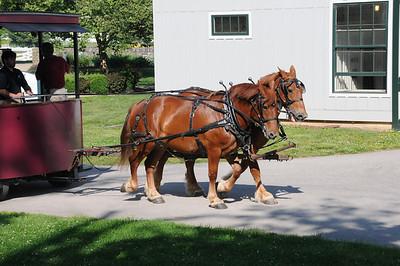 Kentucky Horse Park 51812