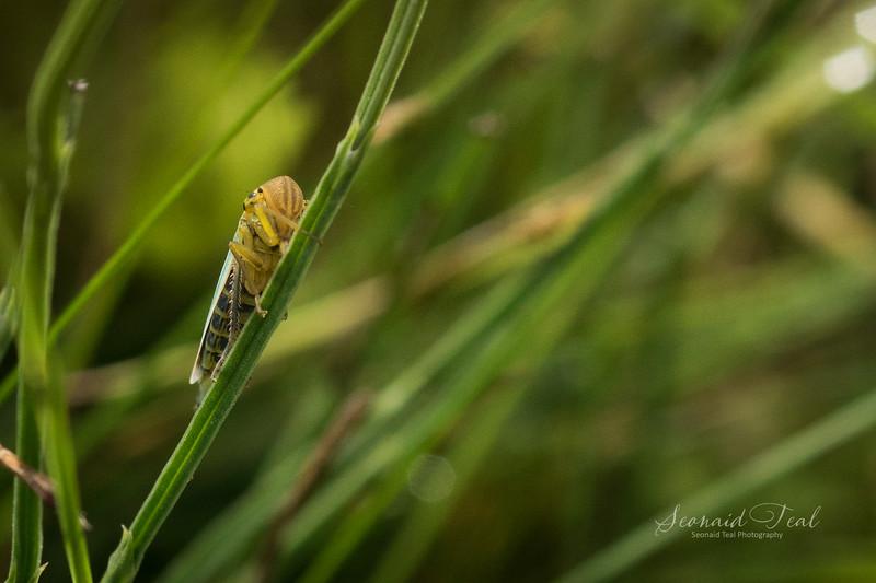 On a stalk