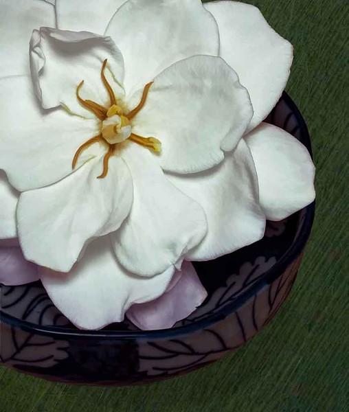 2019FLgreenOWER - GARDENIAHATS - FLOWER - GARDENIA  Backyard Gardenia.jpg