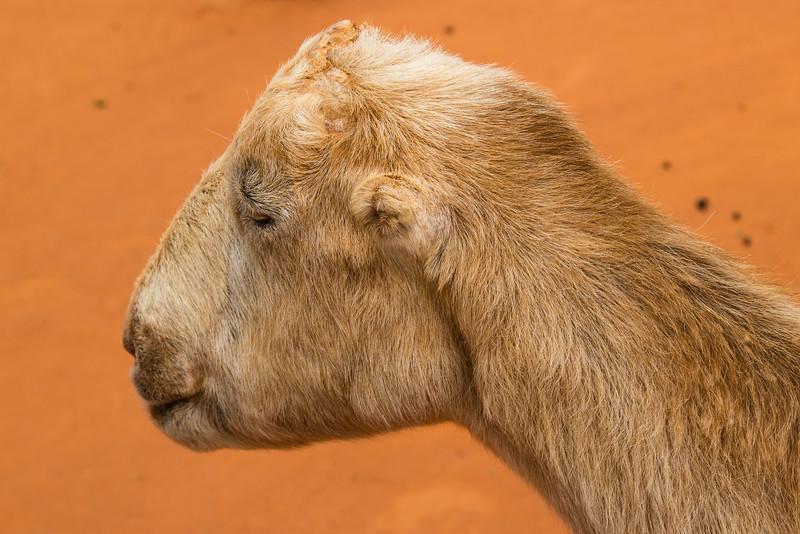 Gatorland - Petting Zoo
