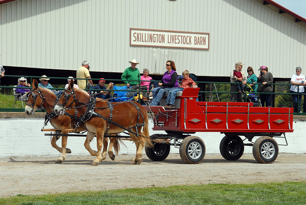2016 Driving Mule Show