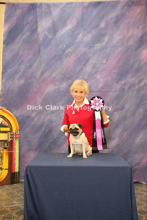 Top Pugs of 2009 - Award Photos