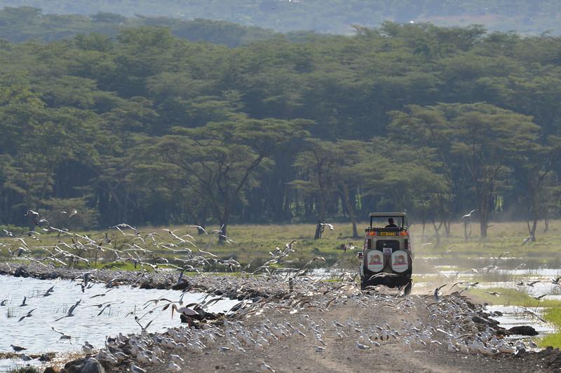 East Africa Safari 114.jpg