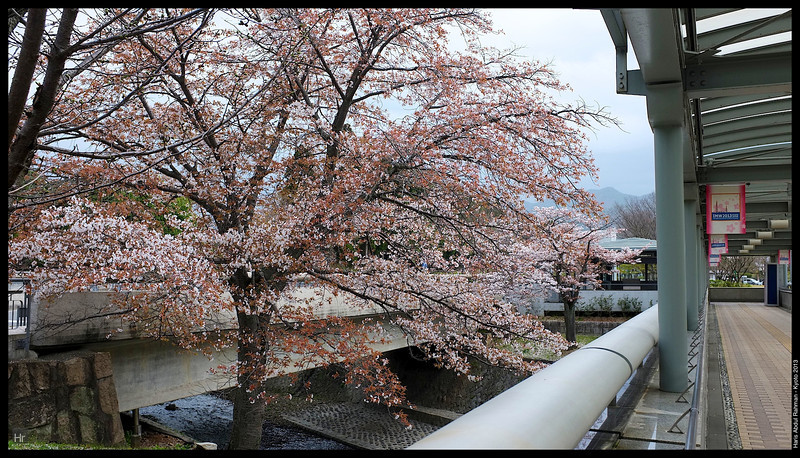 It was gorgeous even on a dull day  Kyoto 2013