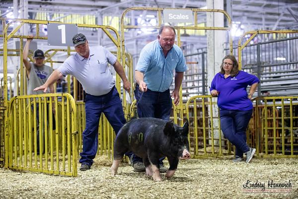 Open Hog Show