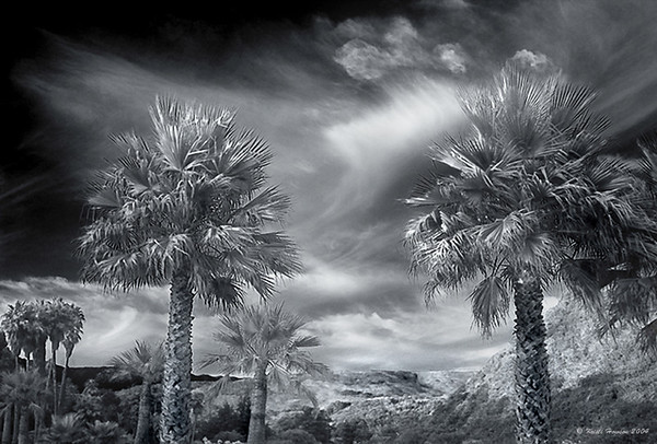 Black & White, Sepia & Duotones