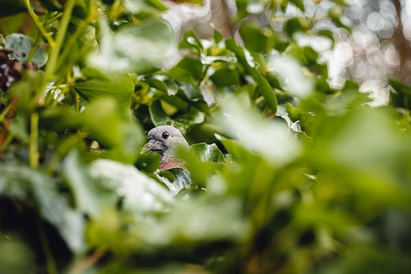 Jonge duifjes